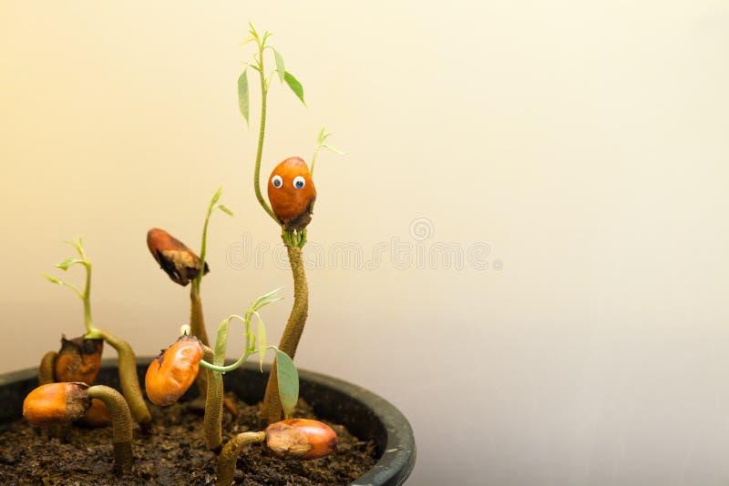 En växt av den tropiska söta fruktkonungen av fruktdurianen i form av en mänsklig kontur royaltyfri foto
