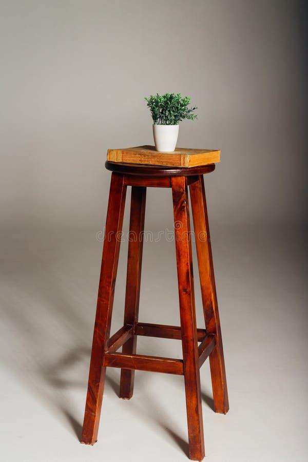 En växt i en kruka står på en bok, som ligger på en stol, begreppet av biologi, studien av naturen, växer tanke, prioriteter royaltyfria bilder