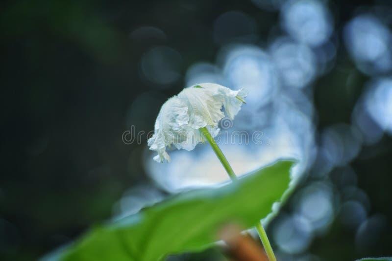 En växt med den blommade blomman royaltyfri fotografi