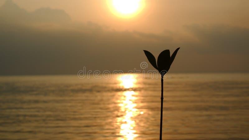 En växt med solnedgångbakgrund arkivfoton