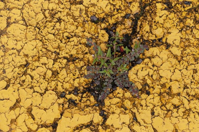 En växt som ändå växer vägen royaltyfria bilder