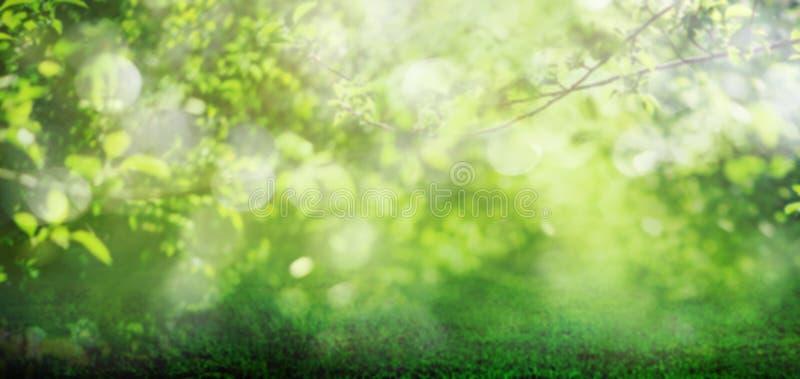 En vårgräsbakgrund med trädsidor royaltyfri bild