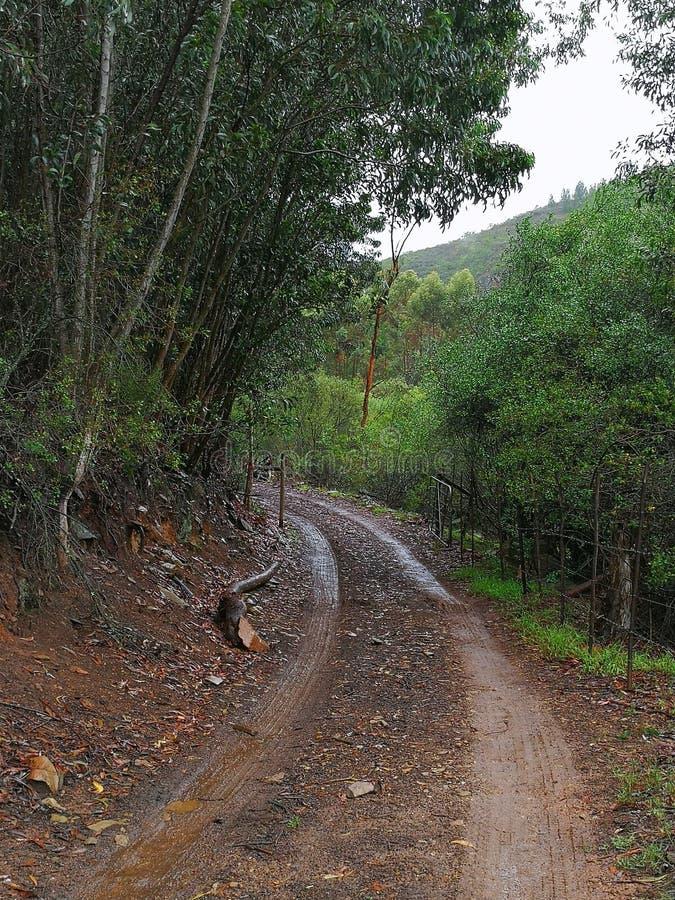 En våt grusväg i en skog på en lantgård på en regnig dag fotografering för bildbyråer