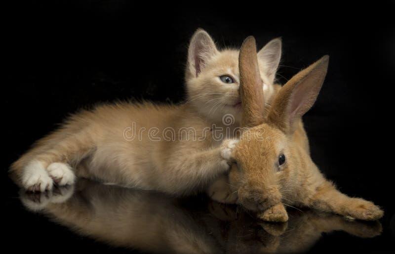 En vacker orange kattunge och orange-brun söt kanin, roliga positioner Djurporträtt isolerat på svart arkivbilder