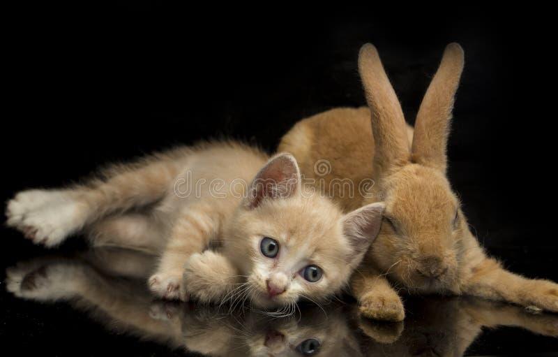 En vacker orange kattunge och orange-brun söt kanin, roliga positioner Djurporträtt isolerat på svart royaltyfri fotografi