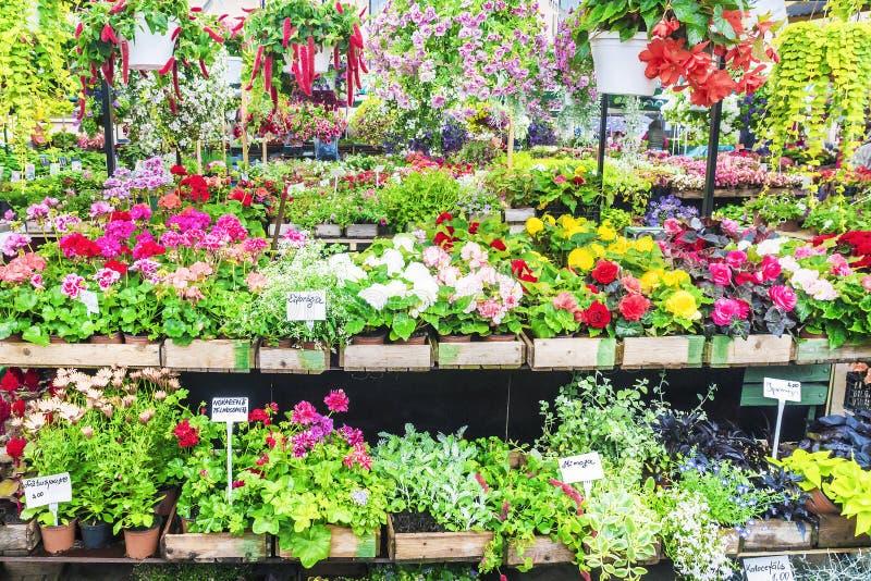 En variation av blommor på hyllorna av marknaden royaltyfri bild