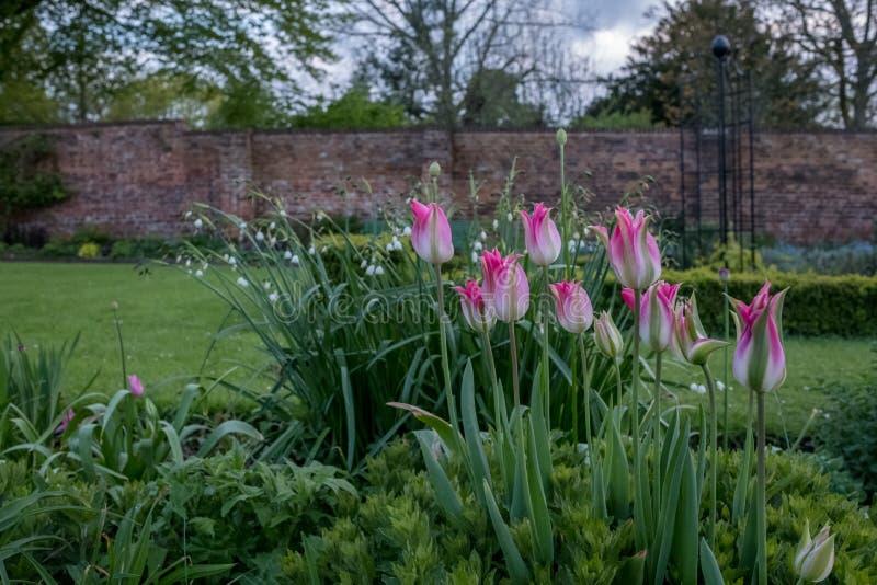 En variation av färgglade lösa blommor på skärm i Eastcote husträdgårdar, historisk walled trädgård som underhålls av volontärer, royaltyfri fotografi