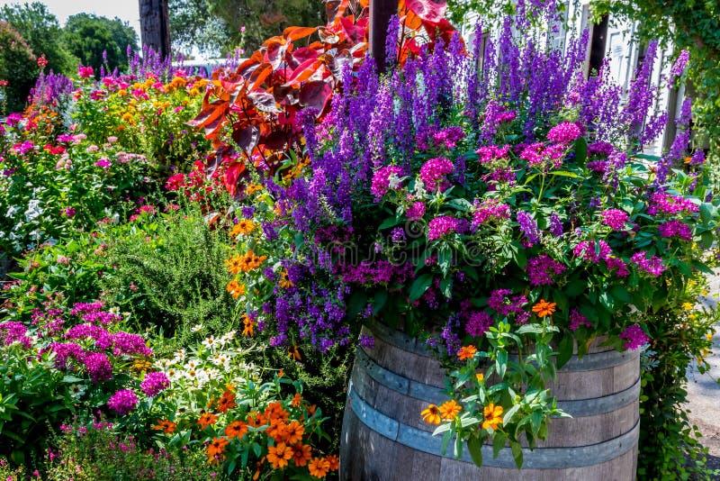 En variation av trädgårds- blommor arkivbild