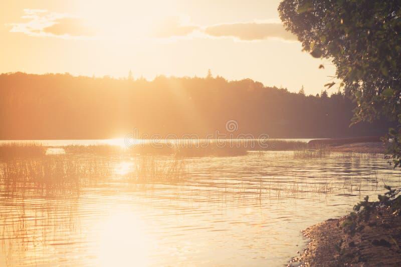 En varm guld- solnedg?ng ?ver en lugna skogsj? royaltyfri foto