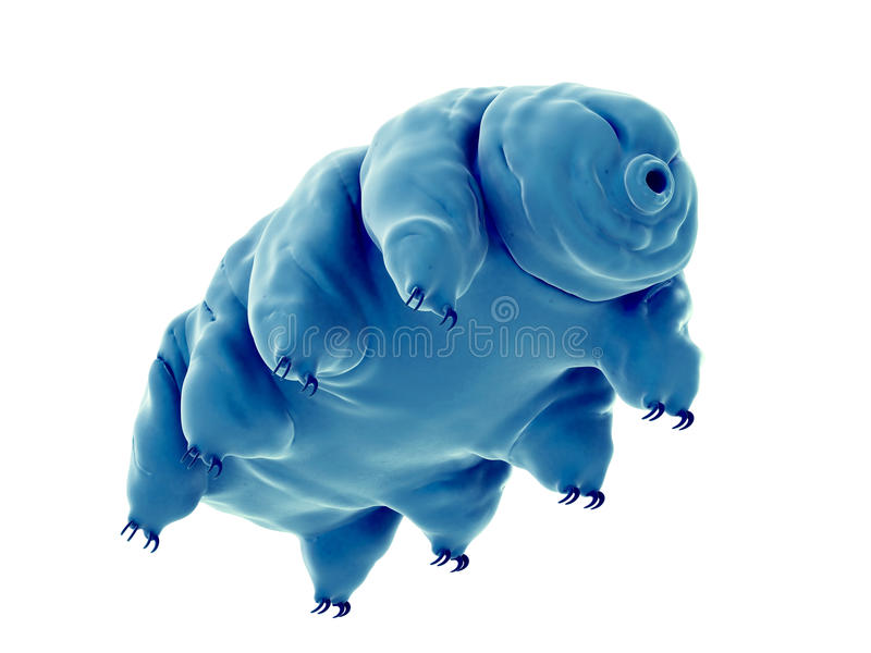 en vattenbjörn stock illustrationer