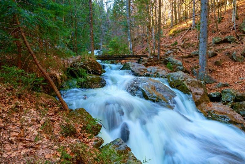 En vattenfall i skogen royaltyfri foto
