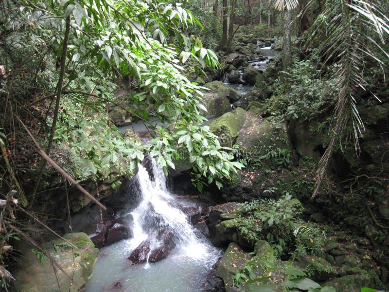En vattenfall i skogen på Makiling botaniska trädgårdar, Filippinerna arkivfoto