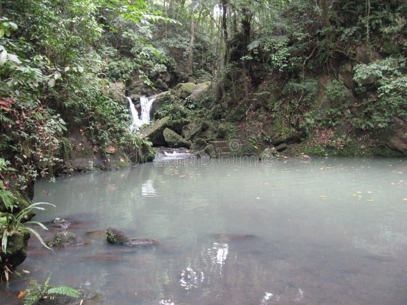 En vattenfall och ett damm i skogen på Makiling botaniska trädgårdar, Filippinerna arkivbild