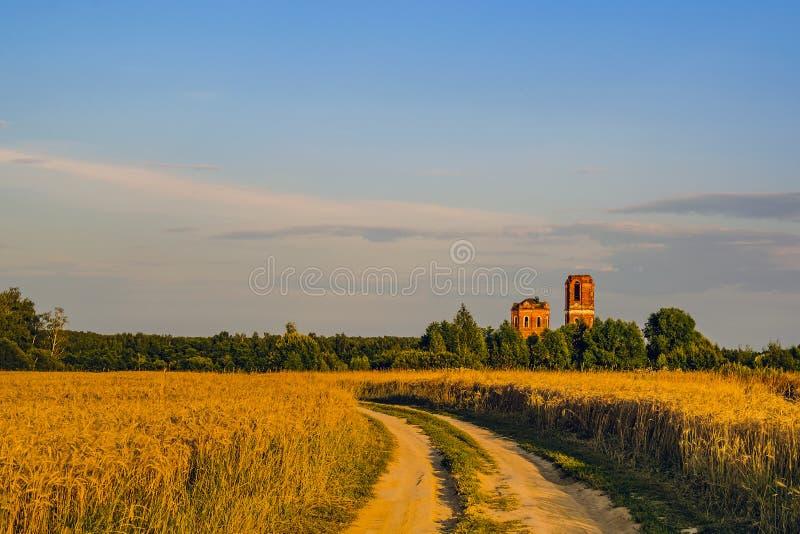 En veteåker, en grusväg och en förstörd lantlig kyrka på solnedgången av en sommardag gör det moscow regionrussia tecknet tänker  royaltyfri fotografi
