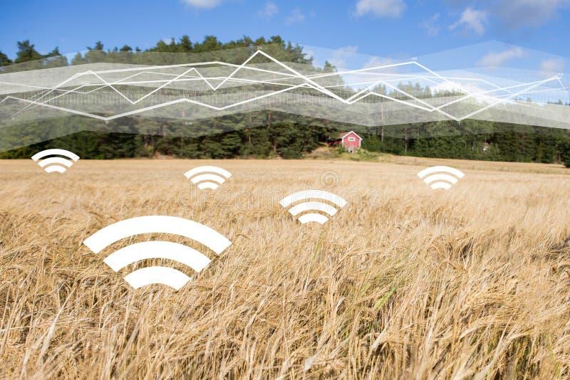 En veteåker med symboler av det trådlösa datautbytet Digitala teknologier i jordbruk arkivfoto