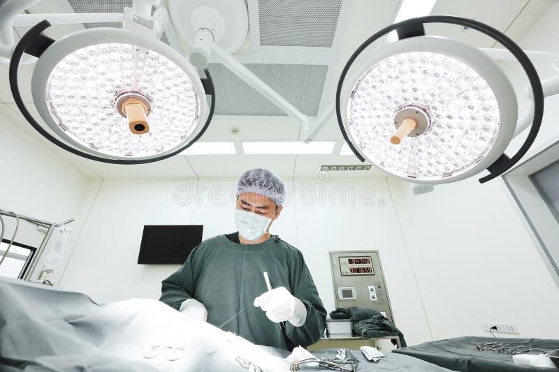 En veterinär- doktor som arbetar i operationrum royaltyfria bilder