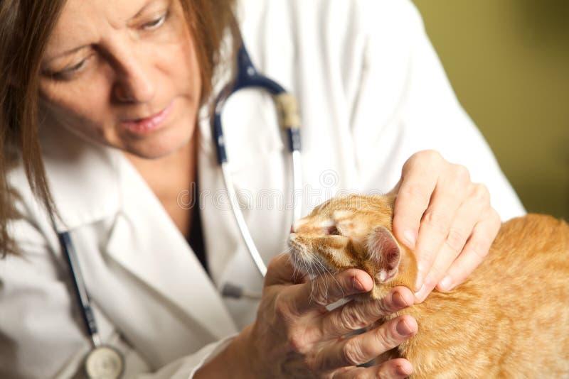 En veterinär- Examining en kattunge arkivfoton