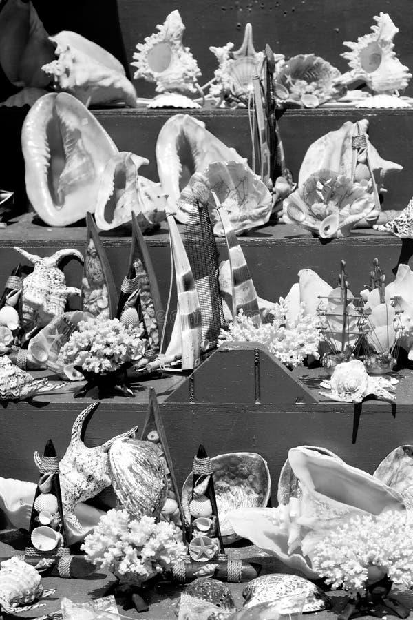 en viejos cáscara y sealife de la tabla del mercado en venta fotografía de archivo libre de regalías