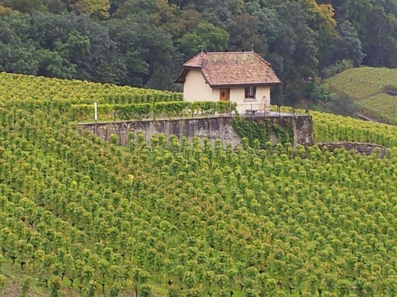 En vingård i sjön geneva, Schweiz område arkivbild