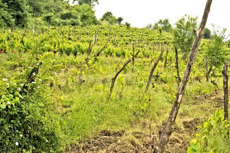 En vinrankakoloni i Ohrid, Macodonia royaltyfri foto