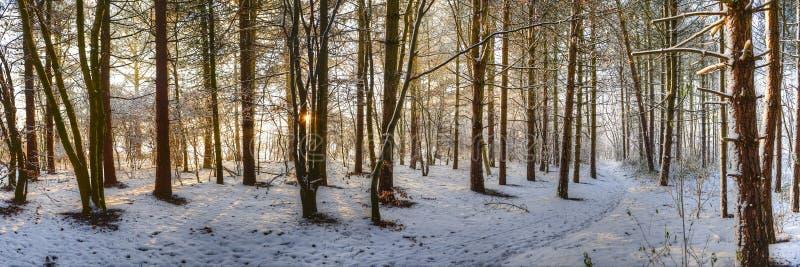 En vinter går royaltyfri foto