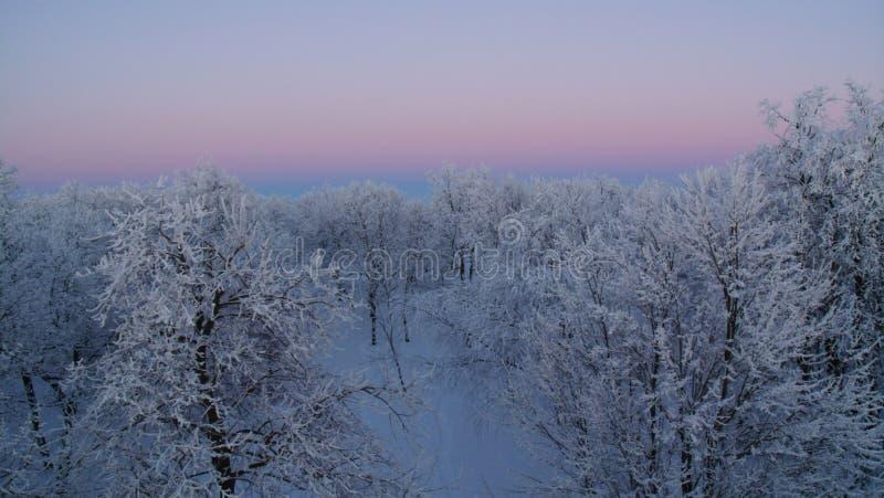 En vintersolnedgång på blåa kullar parkerar royaltyfri bild