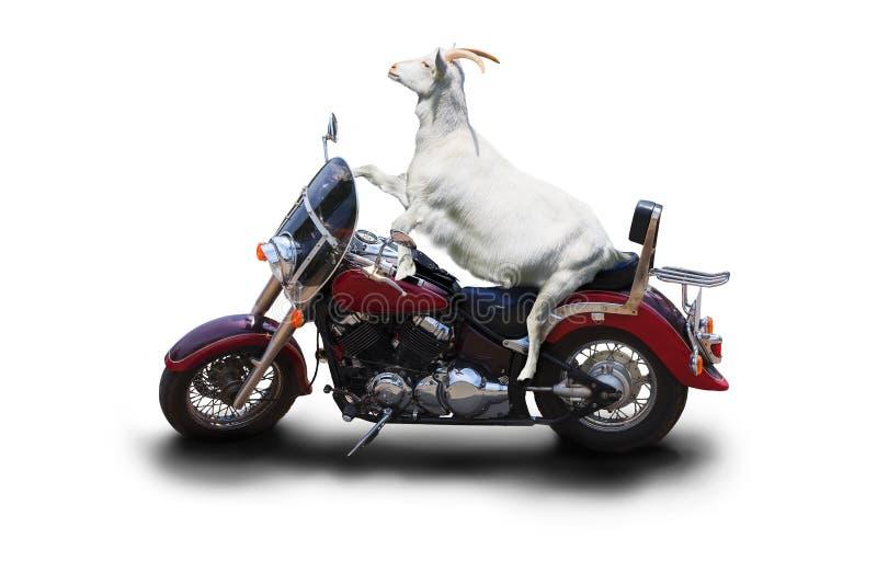 En vit getcyklist sitter på en härlig motorcykel arkivbilder