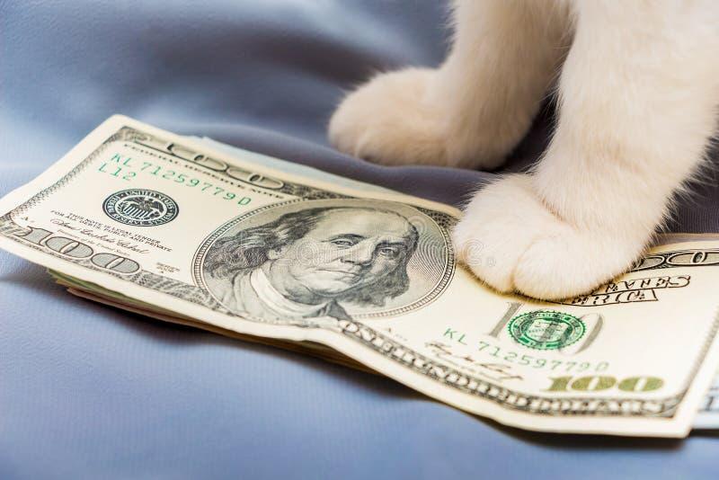 En vit katt satte tafsar på en packe av USA-dollars_ arkivbilder