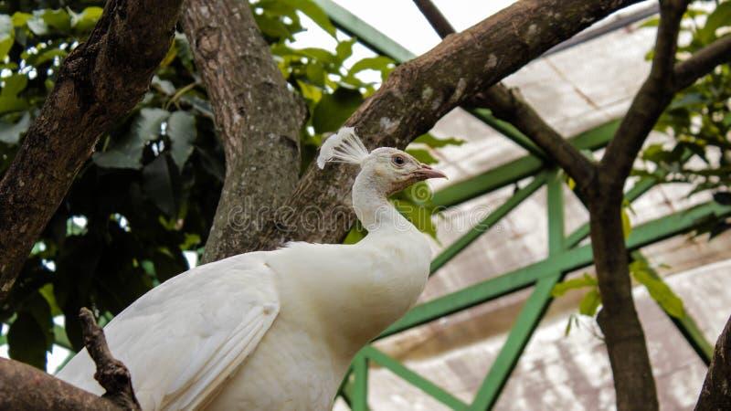 En vit påk som sitter på en gren som reflekterar livet royaltyfria foton