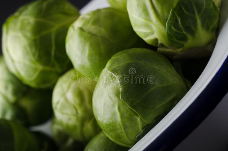 Enamel Baking Tin filled with Leafy Green Brussel Sprouts. Close up of leafy green brussel sprouts in white enamel baking pan with navy blue stripe royalty free stock photography