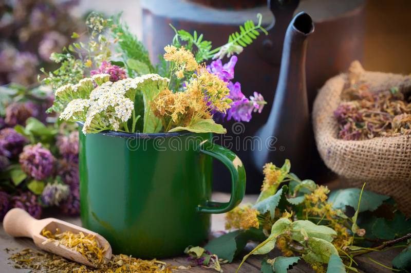 Enameled mug of summer healing herbs, old tea kettle and medicinal plants. Enameled mug of summer healing herbs, old tea kettle and medicinal plants for healthy stock images