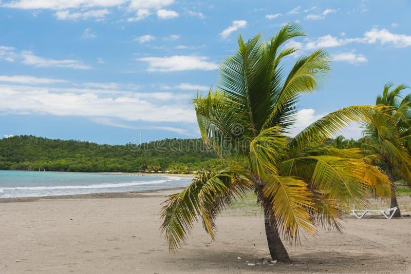 Enarene la playa con la palmera del coco, mar del Caribe en Cuba imagen de archivo