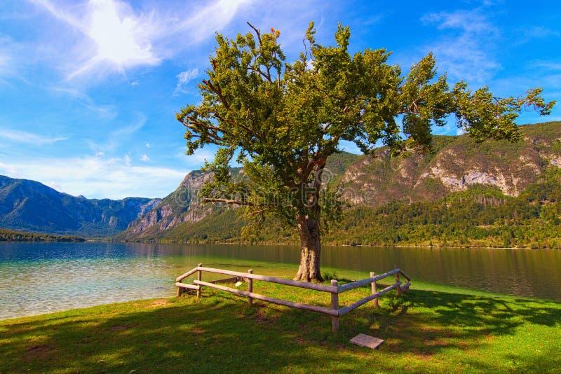 Enbart träd täckt av gröna blad nära Bohinj Bohinjsko-jezero vid solens dag Begreppet landskap och natur royaltyfri fotografi