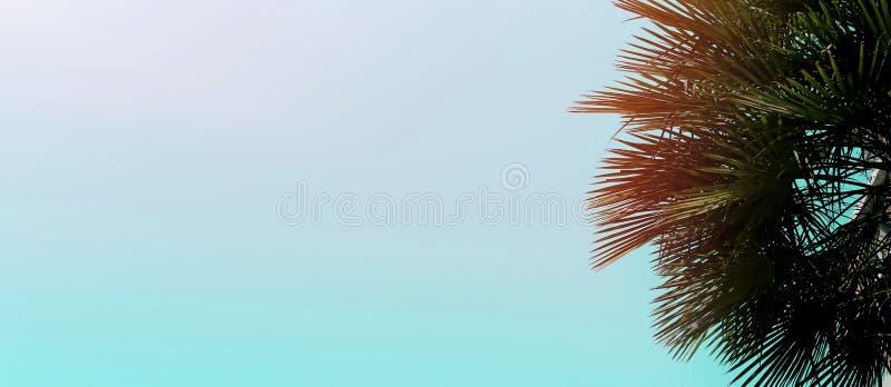 Encabeçamento da bandeira e do Web site com espaço da cópia na cor azul e na palmeira imagem de stock