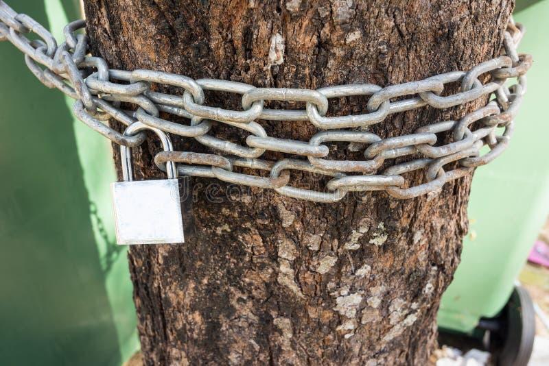 Encadene y padlock para la madera del corte de la gente Prevent, estafa del árbol de la reserva fotografía de archivo libre de regalías