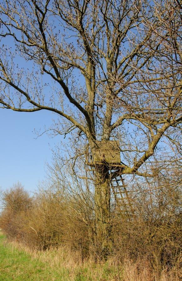Suporte da caixa em uma árvore foto de stock
