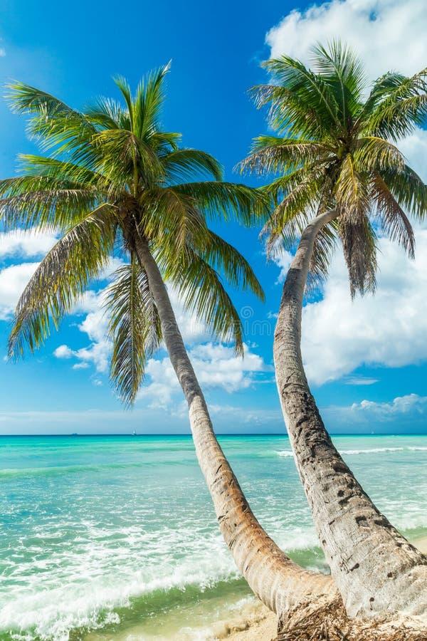 Encalhe com palma de coco, ilha tropical desinibido imagens de stock