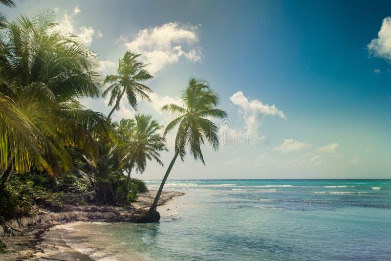 Encalhe com palma de coco, ilha tropical desinibido imagens de stock royalty free