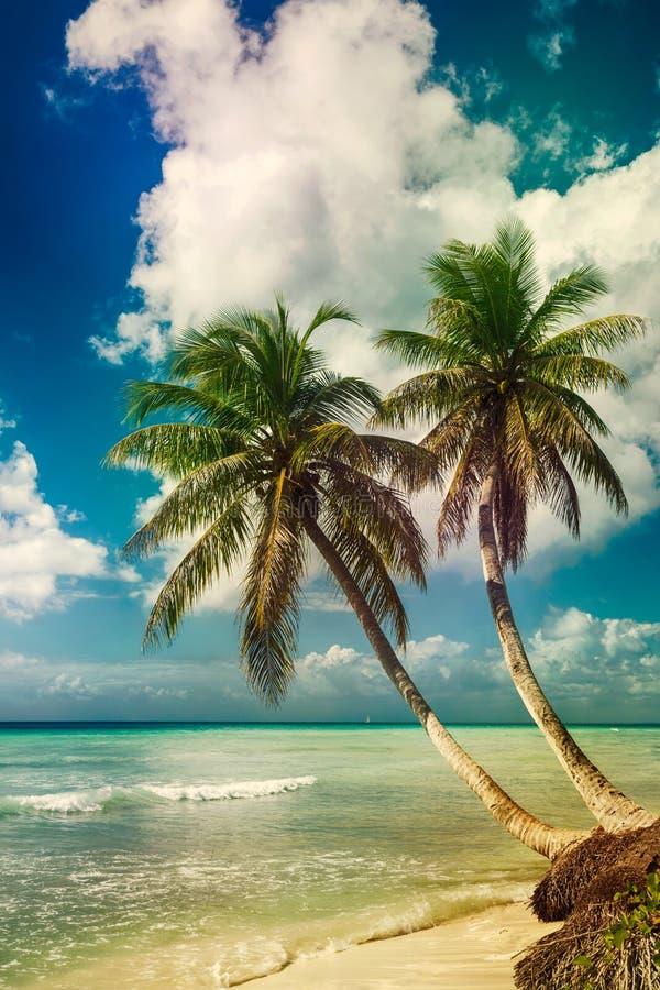 Encalhe com palma de coco, ilha tropical desinibido fotografia de stock royalty free