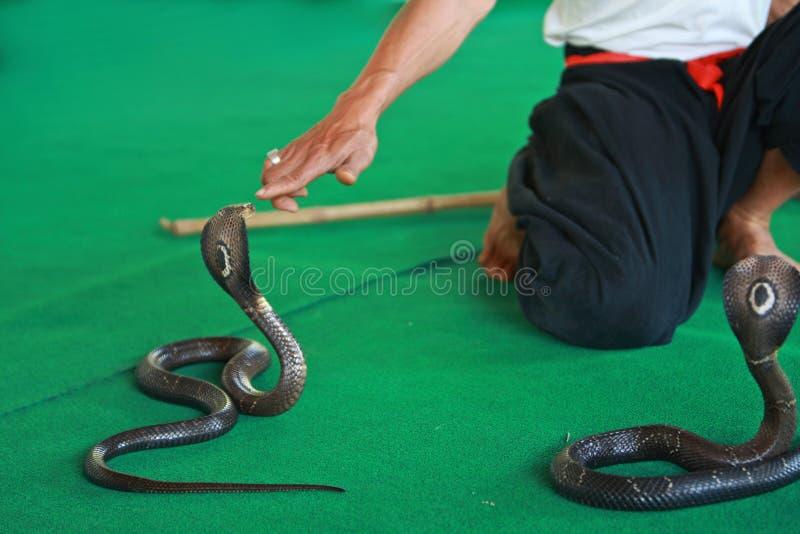 Encantador da serpente imagens de stock