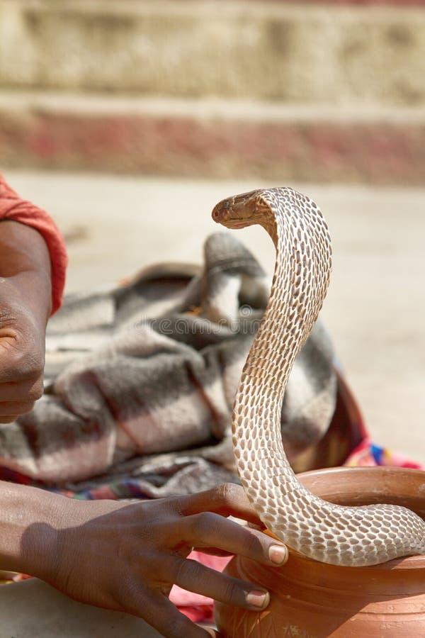 Encantador de serpiente pasado (Bede) de Benares foto de archivo libre de regalías