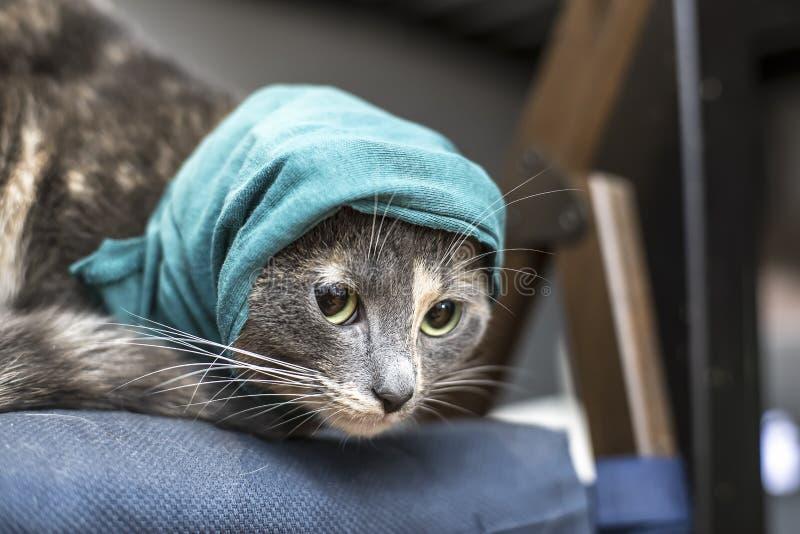 Encantando, o gato pequeno em um chapéu verde feito malha está sentando-se em um descanso macio e está olhando-se para a frente p imagens de stock royalty free