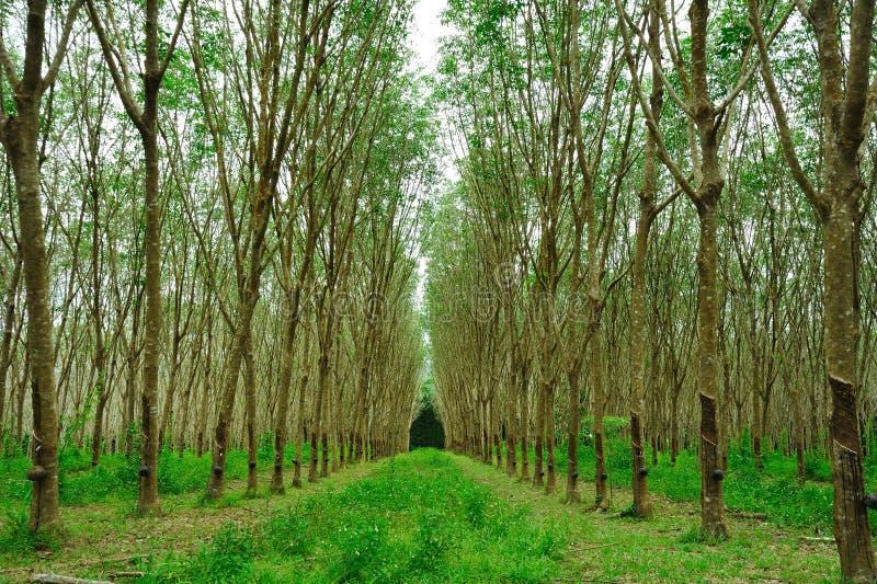 Encantar em Forest Path profundo fotos de stock royalty free