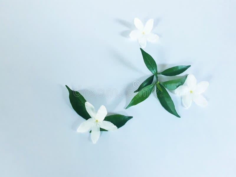 Encanto de la flor blanca imágenes de archivo libres de regalías
