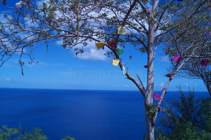 Encanto del corazón en árbol fotografía de archivo libre de regalías