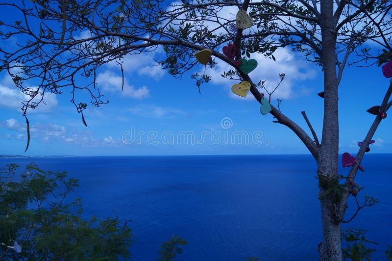 Encantos del corazón en un árbol fotografía de archivo libre de regalías