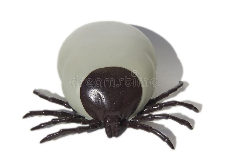 Encephalitis tick. On white isolated background stock photos