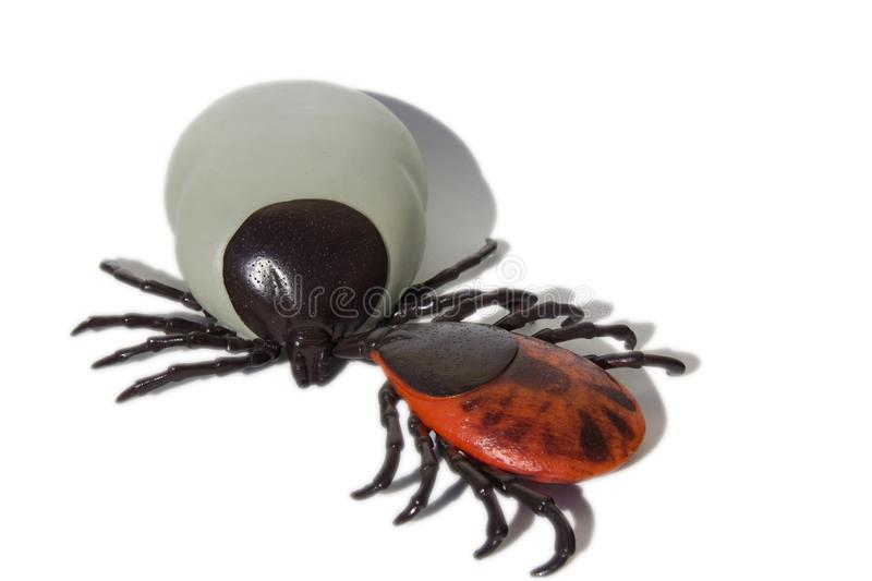 Encephalitis ticks. On white isolated background royalty free stock image