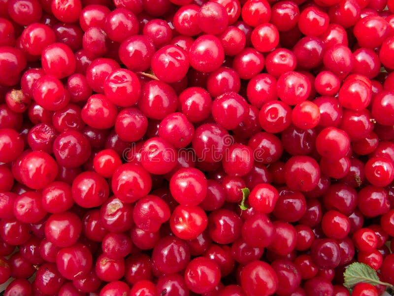 Encerramento de um bando de cerejas vermelhas imagens de stock royalty free