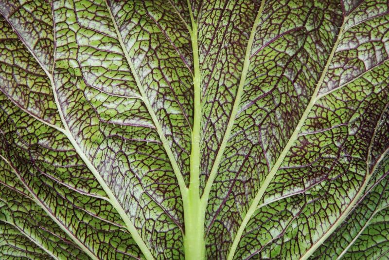 Encerramento do padrão abstrato natural de folhas de legumes frescos imagem de stock